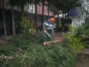 Gehölzschnitt & Baumfällung